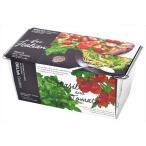 デリッシュガーデンダブル イタリアンセット バジル・ミニトマト 観葉植物 ガーデニング 聖新陶芸 ギフト プレゼント 景品