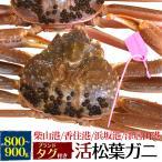 国産 産地証明タグ付き 活き松葉ガニ(ズワイガニ) 約800〜900g 産地直送 刺身、焼きガニ、カニ鍋用 返品不可