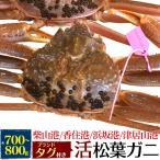 国産 産地証明タグ付き 活き松葉ガニ(ズワイガニ) 約700〜800g  産地直送 刺身、焼きガニ、カニ鍋用 返品不可