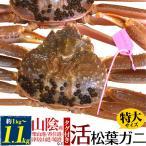 特大活き松葉ガニ(ズワイガニ) 約1kg〜1.1kg 産地直送 刺身、焼きガニ、カニ鍋用 国産 産地証明タグ付き