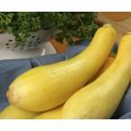 V114 SQUASH EARLY PROLIFIC (5粒) 世界の珍しい野菜の種