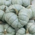 V172 SQUASH TRIAMBLE (3粒)世界の珍しい野菜の種