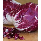 V177 CHICORY VERONA RED RADDICHIO(20粒)世界の珍しい野菜の種