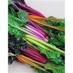 V207 レインボー ミックス スイスチャード (5粒) 世界の珍しい野菜の種