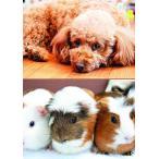 令和2年16ページ 動物カレンダー 5月始まり ペット 贈り物 就職 新学期 プレゼント 中綴じ16ページ 令和元年5月?令和2年4月