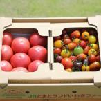 ギフト トマト サンシャイントマト詰め合わせ3kg (大玉・中玉・ミニ) お取り寄せ野菜 ワンダーファーム