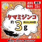 【送料無料】 高品質 タマミジンコ 約10000匹+グリーンウォーターのおまけ付き  めだかの餌や金魚の稚魚など 産卵促進餌