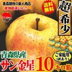 希少品種!あすつく 送料無料 りんご 10kg箱 サン金星 ご家庭用 訳あり 鮮度抜群 青森 リンゴ 10キロ箱 大小様々