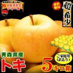 あすつく 送料無料 りんご 5kg箱 サンふじ ご家庭用 訳あり 鮮度抜群 青森 リンゴ 5キロ箱 大小様々
