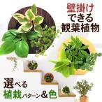 壁掛け観葉植物 ミドリエ デザイン 丸型 木目調グリーンフレーム