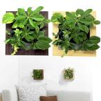 壁掛け観葉植物 ミドリエ デザイン 「木目調フレーム 樹脂製」