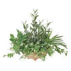 送料無料ポイント10倍《アートグリーン》《人工観葉植物》光触媒 光の楽園 寄せ植えオリーブ