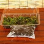 苔玉キット(天然苔)