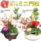 迎春:ミニ門松B(黒松・南天・ハボタン・ガーデンシクラメン)陶器鉢(四角)・受け皿付*(竹の色・鉢の色が選べます)