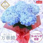 """母の日:アジサイ(紫陽花) """"万華鏡""""*ラッピング付"""