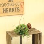 多肉植物・観葉植物:グリーンネックレス・ルビーネックレス・ゴールデンマージン*吊り鉢