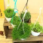 多肉植物・観葉植物:三日月ネックレス・コチドレンペンデンス・グリーンネックレス・ルビーネックレス・リプサリス*吊り鉢選べます。