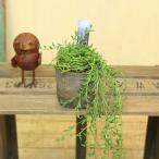 グリーンネックレス 観葉植物:ラディカンスバナナ×モスポット*