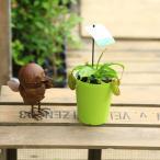 食虫植物:ネペンテス ウツボカズラ アラータ*ネペンシス 観葉植物 3.5号
