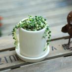 観葉植物 多肉植物:マーブルネックレス*クレムラウンドS 受け皿付 斑入りグリーンネックレス