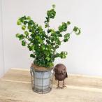 観葉植物:フィカスベンジャミン ベンジャミナバロック ブリキのポットカバー付き*ココヤシ飾り