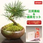 ミニ盆栽:三河黒松(瀬戸焼)と道具セット*鉢植え祝い ギフト gift 誕生日祝  御祝 プレゼントにも