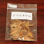 シマトネリコ 種子
