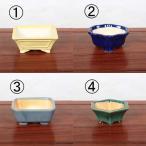 中国陶器鉢 約12~15cm