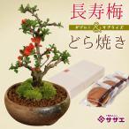 y-bonsai_sweets-set-0350