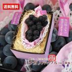 お取り寄せグルメ ぶどう 送料無料 ナガノパープル 長野県産 種なし 皮ごと 特撰 1房 化粧箱 贈答用 おためし