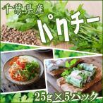 y-fresh_coriander-1