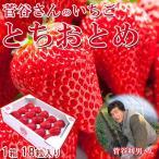 予約注文開始 いちご とちおとめ 18粒入 いちごっ子 完熟 菅谷いちご園 茨城県産 産地直送