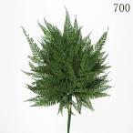 大地農園 ドライフラワー  ヒメワラビ  20枚入り  グリーン DO050330-700