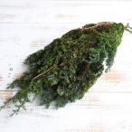 《 プリザーブドフラワー 》★即日出荷★大地農園 ソフトヒムロスギ フレッシュグリーン クリスマスグリーン 〇