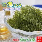 沖縄県産 海ぶどう 50g×4袋 化粧箱なし 届いてすぐ食べられるタレ付き うみぶどう