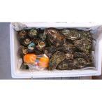 ふるさと納税 時津町 大村湾産 殻付き牡蠣約3.5kgとさざえ800gBセット(加熱用)
