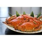 西尾市 ふるさと納税 朝獲れ浜茹での愛知県産茹で渡り蟹約1.5kg(6〜10杯) K012
