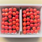 上山市 ふるさと納税 さくらんぼ(佐藤錦)1kg サイズ混合 0085-2001