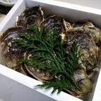ふるさと納税 知夫村 知夫里島産 岩牡蠣 4kg