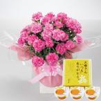 母の日 2020 プレゼント ギフト ピンクカーネーション鉢植えとまるごとみかんゼリーのセット スイーツセット || 送料無料 メッセージカード 母の日ギフト PT