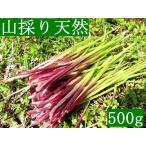 発送中!山菜・山採り・黒部産・天然蕗・山ふき・フキ 500g強