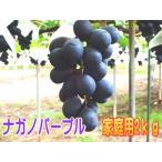 【ご家庭用】ナガノパープル信州長野県産2kg!9月上〜中旬から順次発送!