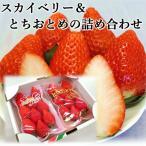 いちご スカイベリー とちおとめ 詰め合わせセット 1箱300g×2パック 期間限定 栃木県産 産地直送 プレゼント ギフト バレンタイン 日時指定は出来ません。