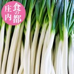 雪中軟白ネギ 送料無料 12袋 軟白ねぎ 山形県庄内産 新鮮 地物野菜 葱 食の都庄内