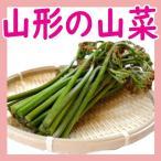 【天然 わらび 500g】山形県産 ワラビ 山菜 母の日 野菜 庄内地方