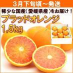 みかん オレンジ 3月下旬頃から発送・愛媛県産「ブラッドオレンジ(タロッコ種)」 1,5kg
