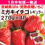 ショッピング初売り 2017初売りセール いちご 宮城県・GRA「ミガキイチゴ」 レギュラー 275g×4パック