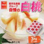 もも 桃 8月下旬頃から発送 福島県飯坂町 木村さんたちの白桃 秀品3kg(9〜12個) 晩生種 品種おまかせ 送料込