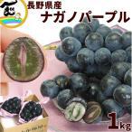 ぶどう ナガノパープル 9月上旬頃から発送・長野県産「ナガノパープル」 秀品 1kg(約500g×2房)