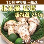まつたけ 松茸 9月下旬頃から発送・北米産松茸 超特選250g(つぼみ・2〜10本) 徳島県産すだち2個付